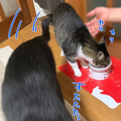 猫のエサ強奪