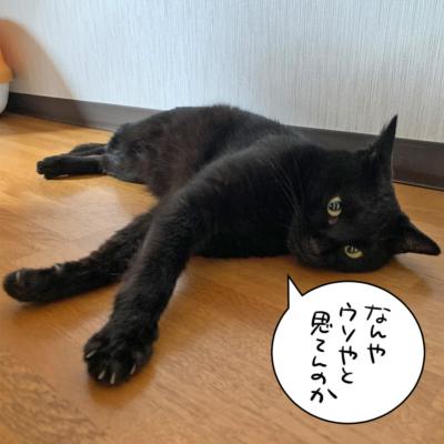寝そべる黒猫ナノ