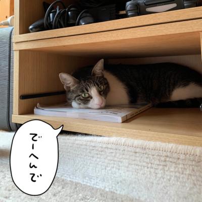 引き出しの中のキジシロ猫きなこ