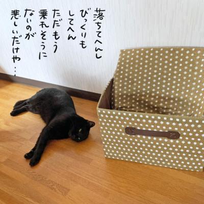 黒猫ナノと箱