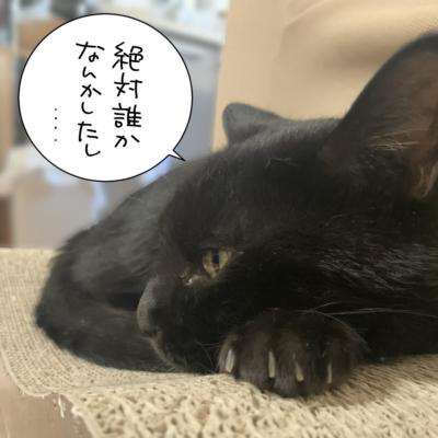 横顔の黒猫ナノ