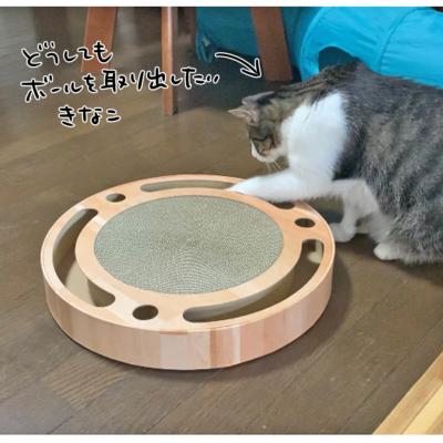 猫壱バリバリパッドコロコロボールで遊ぶきなこ