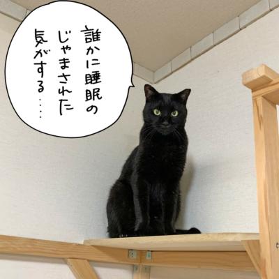 キャットタワーの上の黒猫ナノ