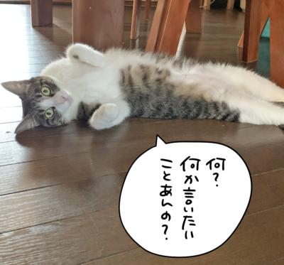 床でごろごろするキジシロ猫のきなこ