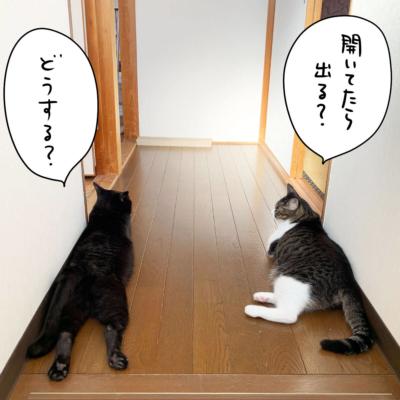 黒猫ナノとキジシロ猫きなこの密談