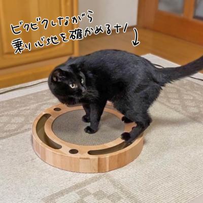 猫壱バリバリパッドコロコロボールで遊ぶナノ