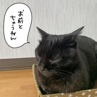 ふてくされる黒猫のナノ