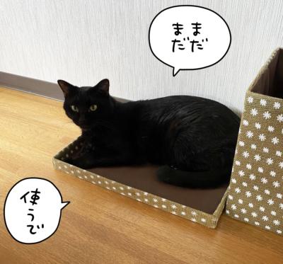 箱のふたでくつろぐ黒猫ナノ