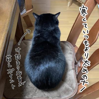 寒くて膨らむ黒猫のナノ