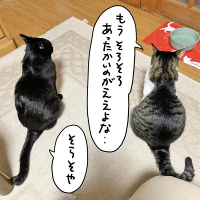 黒猫ナノとキジシロ猫きなこの後ろ姿