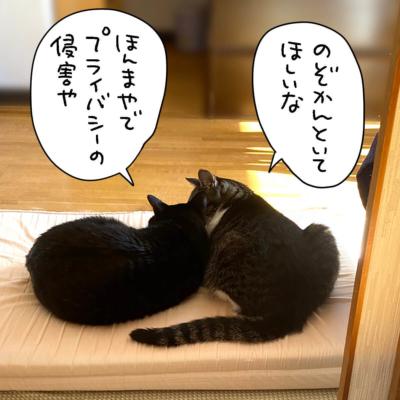 黒猫ナノとキジシロ猫きなこが仲いいところ