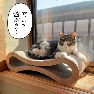 出窓のキジシロ猫きなこ