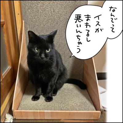 黒猫ナノの写真