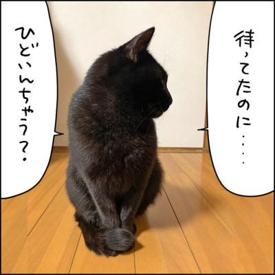横向きの黒猫ナノ
