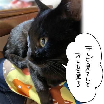 黒猫ナノの横顔