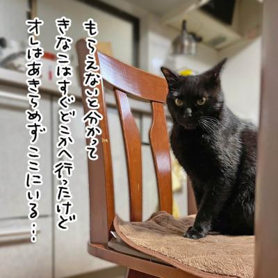 おやつ待ちの黒猫ナノ