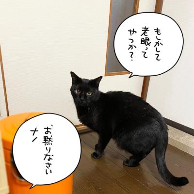 一言多い黒猫ナノ