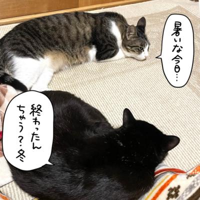 こたつから出てくつろぐ黒猫ナノとキジシロ猫きなこ