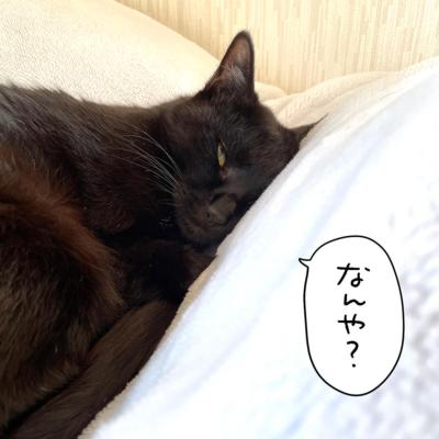 娘の布団で寝る黒猫ナノ