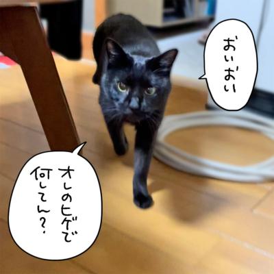 正面から歩いてくる黒猫ナノ