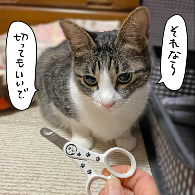 猫壱ストレスなくスパッと切れる猫用爪切りときなこ