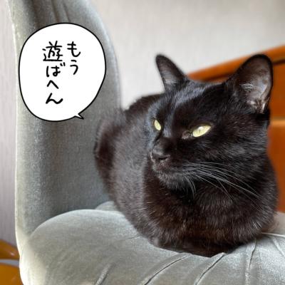 ふてくされる黒猫ナノ