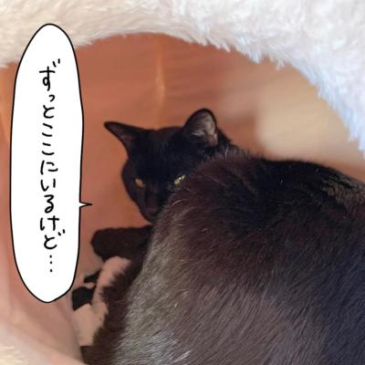ドームベッドから振り返る黒猫ナノ