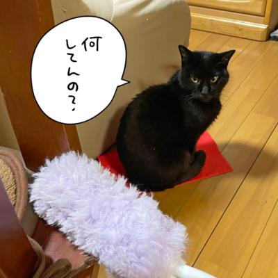 黒猫ナノとクイックルハンディ