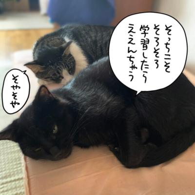 2匹で丸まる黒猫ナノとキジシロ猫きなこ