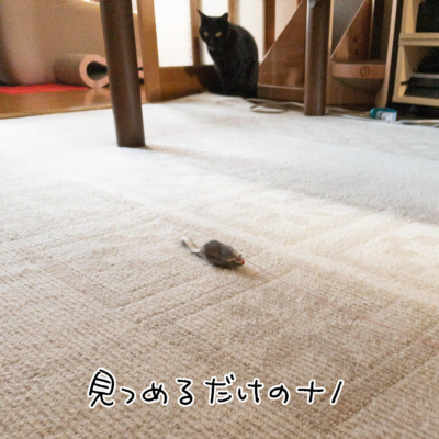 おもちゃを見つめる黒猫ナノ