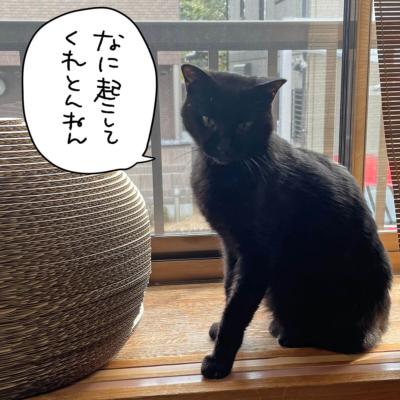 お怒り黒猫ナノ