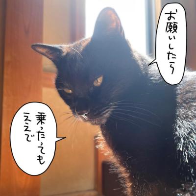 光さす黒猫ナノ