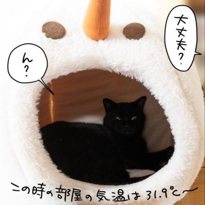 ドームベッドで寝る黒猫ナノ