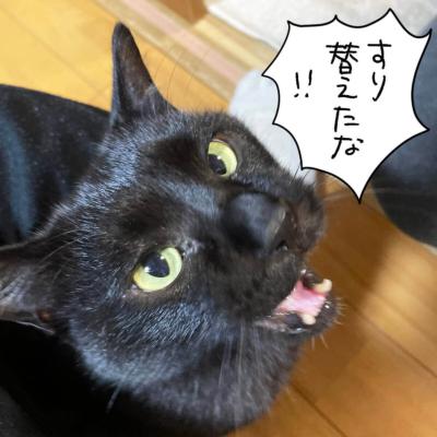 怒る黒猫ナノ