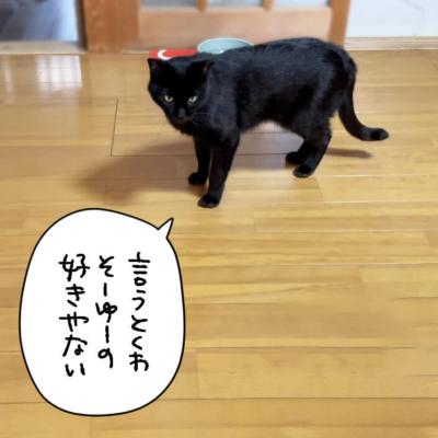 主張する黒猫ナノ