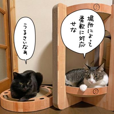 タワーベッドの黒猫ナノとキジシロ猫きなこ