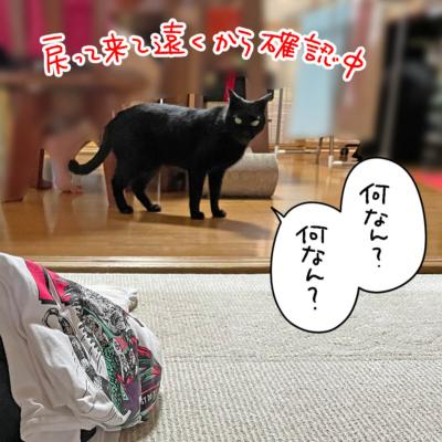 遠くから警戒中の黒猫ナノ