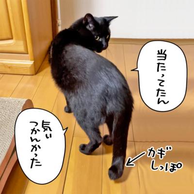 カギしっぽの黒猫ナノ