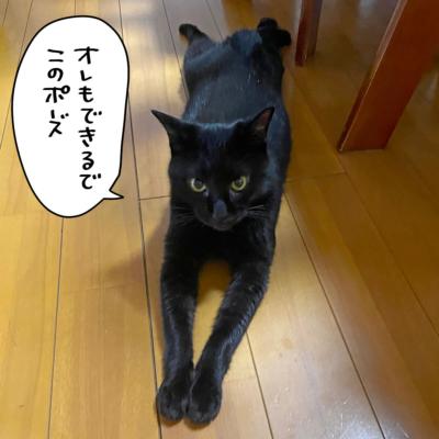 スライダーの黒猫ナノ