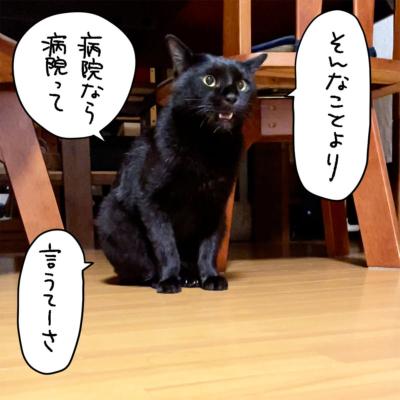 一言文句を言う黒猫ナノ