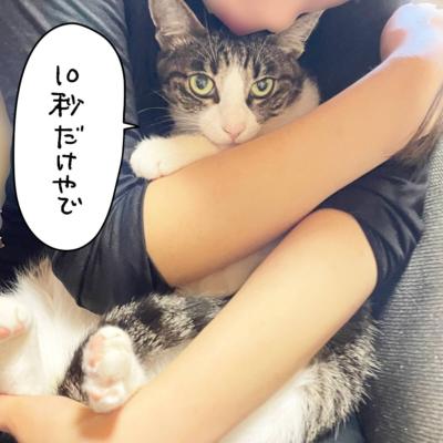 抱っこされるキジシロ猫きなこ