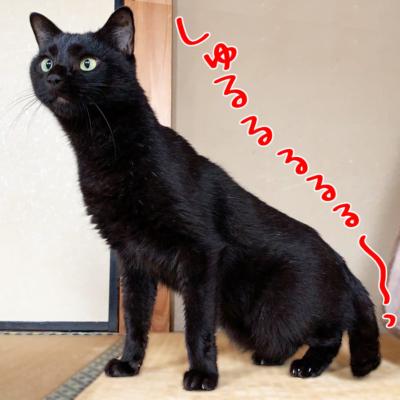 細くなった黒猫ナノ