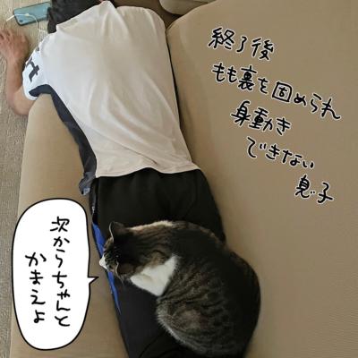 猫好き息子と猫の写真