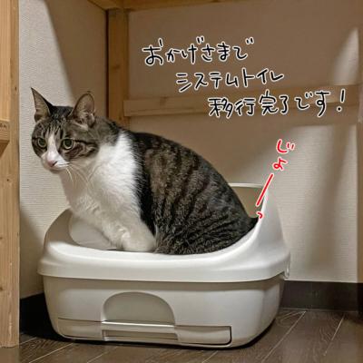 システムトイレ使用したきなこ